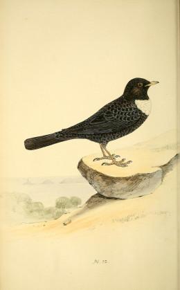 Meyer {1842-1850}