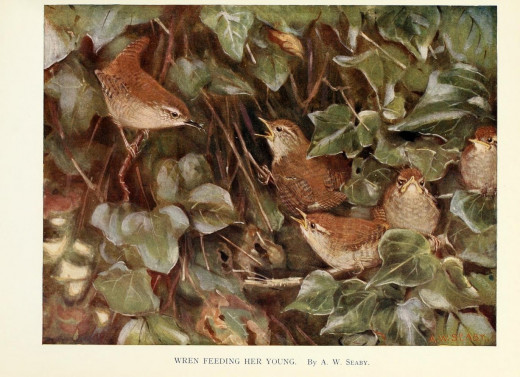 Birds through the year {1896-98}