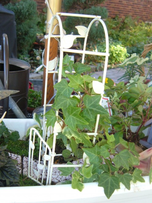 Trim any excess vines so that the ones you are training to go over the trellis will grow more.