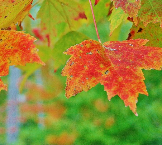 The colors of fall--so beautiful!