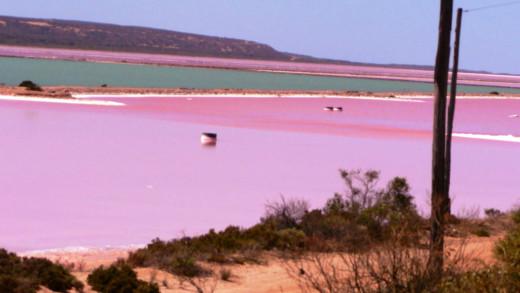 Pink Lake in Esperance Western Australia