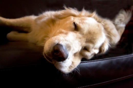 Make time for what matters.  There's nothing like a good nap!