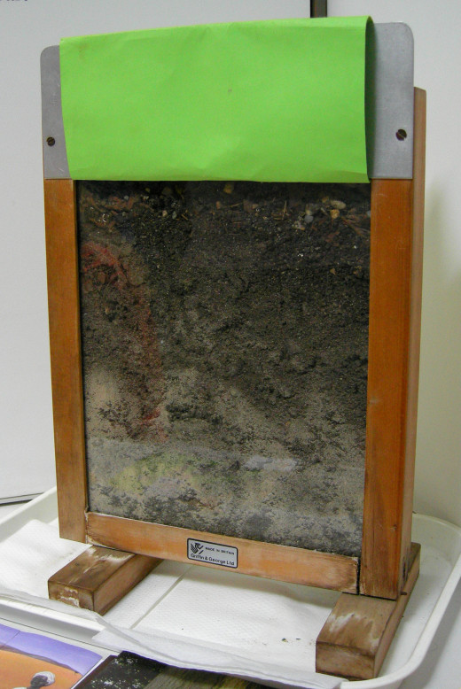 A wormery that shows the worms beneath the soil.