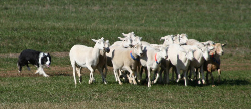 Your teeth are like a flock of shorn sheep coming up from the washing.