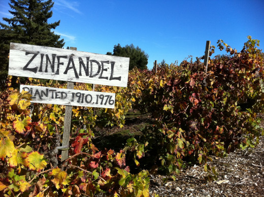 Scientists have proven that Zinfandel is from Dalmatia.  Brought by Croatian immigrants, this vineyard was produced from seedling crops with the immigrants who arrived at the beginning of the 20th century.