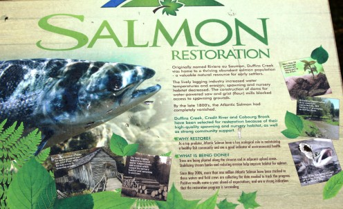 The Salmon Restoration Program Highlights