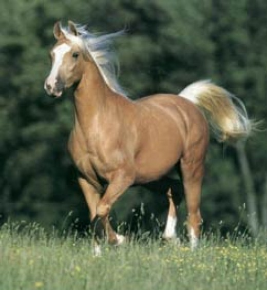 One of our central characters rides a Palomino mare like this one. I just love this image.