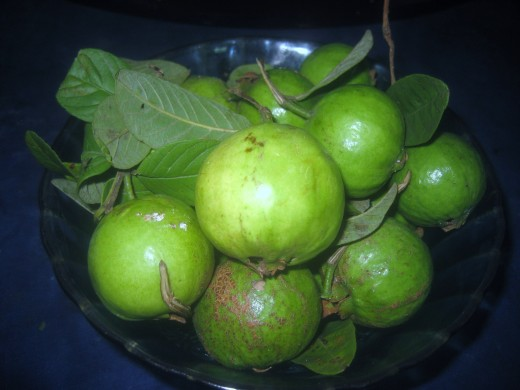 "Ripe Guavas (In some Middle-Eastern regions including Pakistan and North India, guava is also called amrood, possibly a variant of armoot meaning ""pear"" in Arabic and Turkish languages.)"