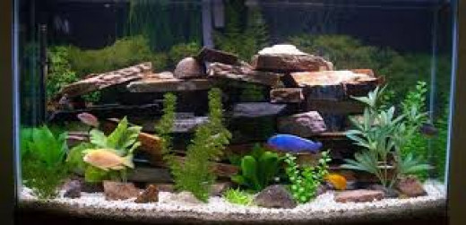 Freshwater aquarium decoration ideas for Aquarium decoration tips