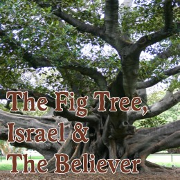 The Fig Tree, Israel and the Believer. Digging deeper than the surface of the Word.