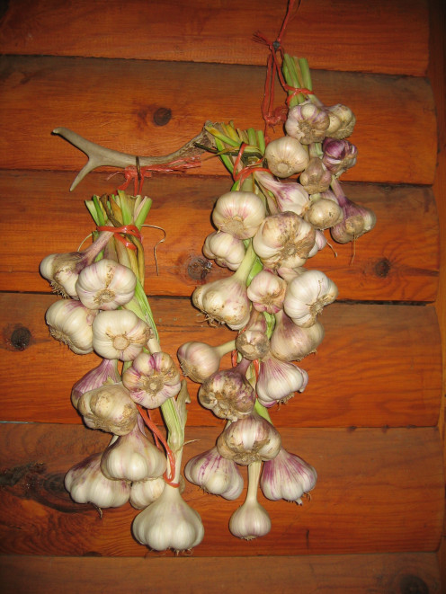 Raw garlic is best, and yummy in a simple salad dressing.