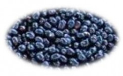 Black Plum (Jamun): Health Benefits and Pharmacological Properties