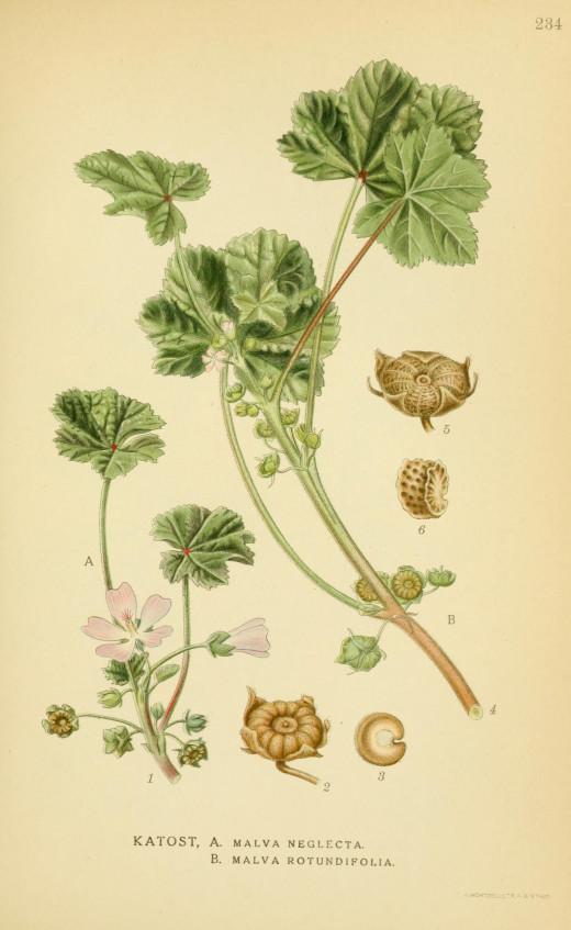 Billdeder of Nordan's Flora {1917-2 7}