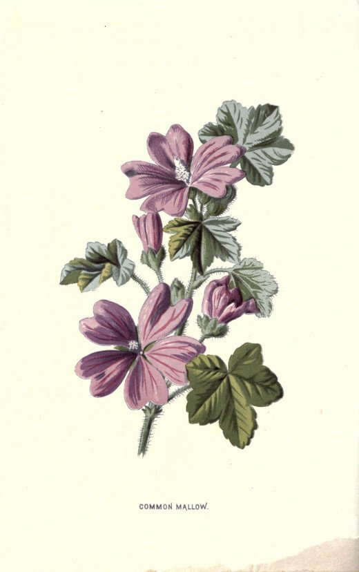 Familiar Wild flowers {1878}