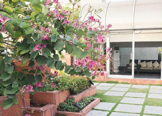 How to make terrace garden a simple guide for Simple terrace garden