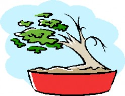 Bonsai Miniature Trees and Natural Scenes