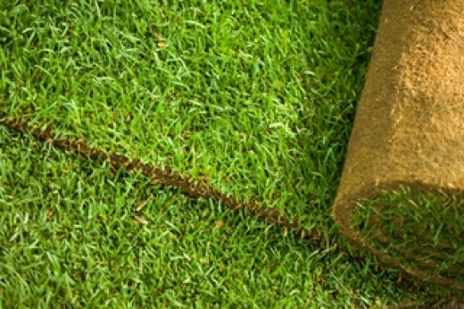 Good turf is solid, consistent and healthy