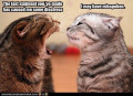 Understanding the sounds and body language of your cat