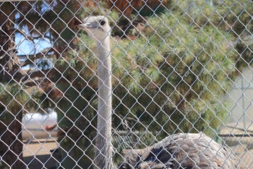 Lion Habitat Ranch Henderson, NV 702-595-6661