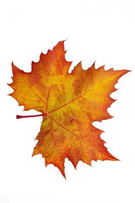 O Fall Glorious: Autumn Poems and Photographs | HubPages