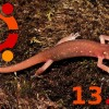 Ubuntu 13.10 : 8 Solid Reasons to Upgrade