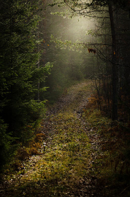 The path from Ulf Bjolin flickr.com