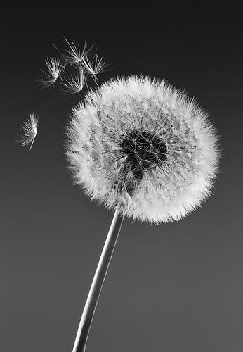 Choices from Gemma Stiles flickr.com