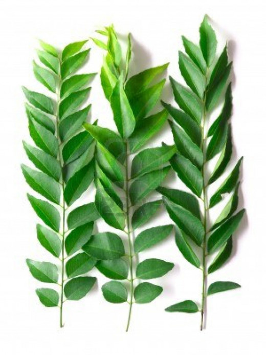 Indian Curry Leaves