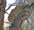 African Landscapes from South Africa - The Big Cats