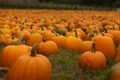 10 Ways to Use Pumpkins