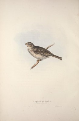 Birds of Europe Gould 1837