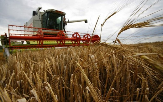 A farmer harvesting barley - one of the UK's main crops.
