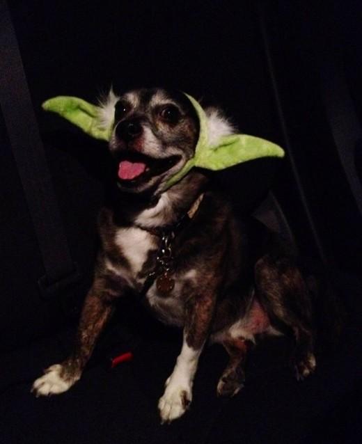 """Brody says, """"Happy Halloween!"""""""