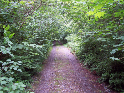 The path of a writer