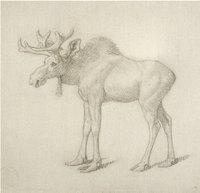 18th Century Sketch of a Moose Calf