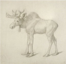 18th Century Sketch of a Moose Calf
