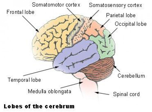The greatest crystal living dwelling are the lobes of the harmonic mind