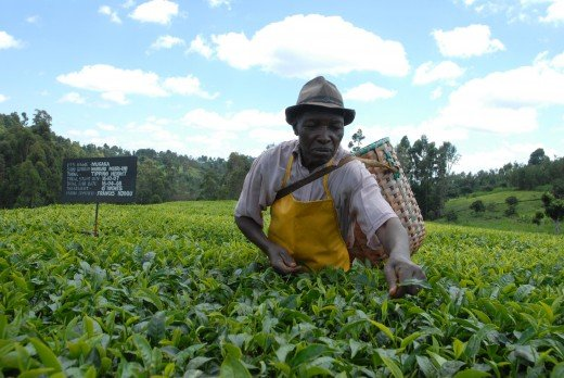 This Kenyan farmer will sell his produce for a much lower price than his British counterparts.