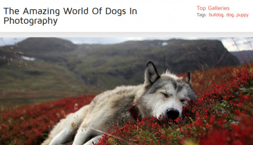 If you love dogs, you will love this site