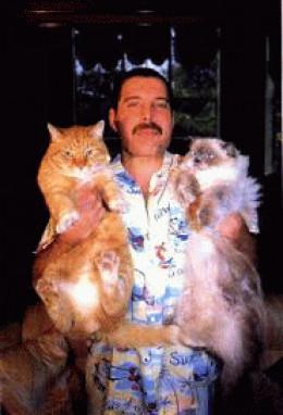 Freddie Mercury had many cats