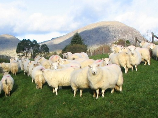 The Welsh farming industries now mainly relies on livestock.