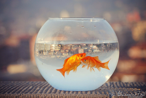 Two lost souls swimming in a fish bowl...from Alessandra Poli flickr.com