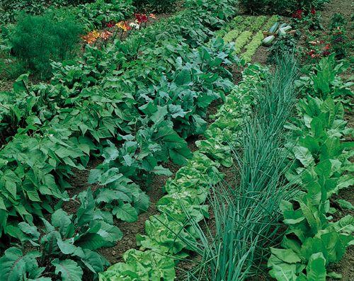 The woman kept a beautiful vegetable garden.