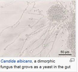 Gut Fungus