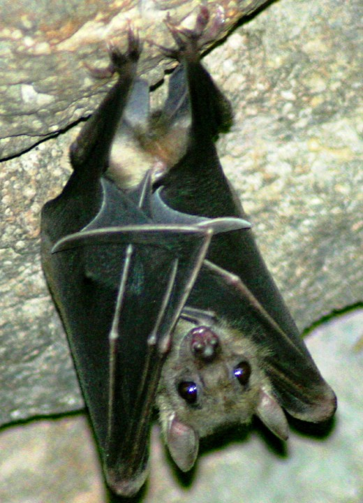Bats are nocturnal.  Their night-time hunting reduces competition for food with birds.
