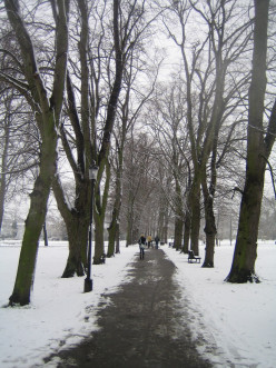 Tree-lined path in Christ's Pieces, Cambridge, UK in winter