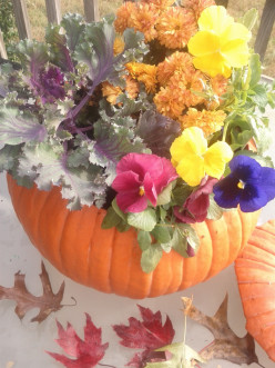 How To Make A Pumpkin Planter For Fall Flowers