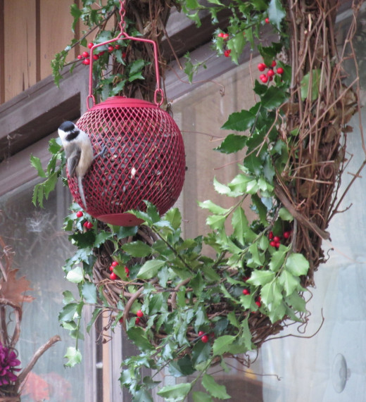 Chickadee enjoying the treats it found in the hanging metal mesh bird seed feeder ball.  This particular feeder works well as part of my decorative holiday wreath.