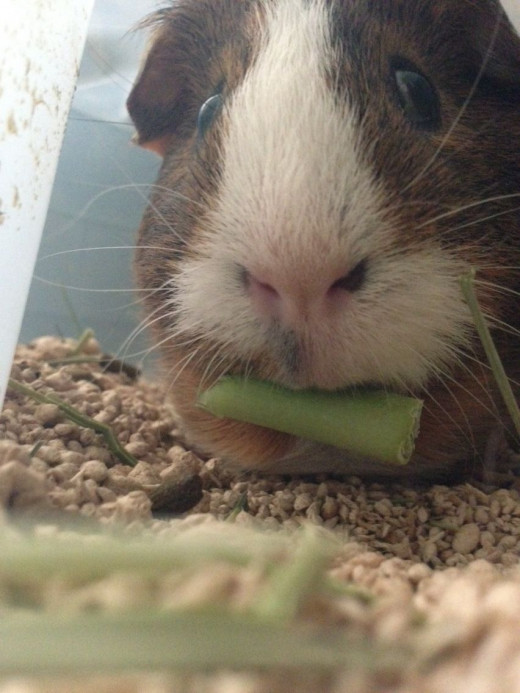 Sonic eating some kale.