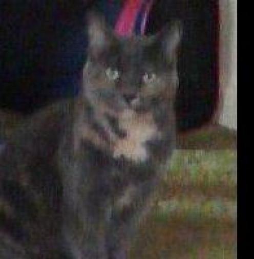 Kitty Bessie